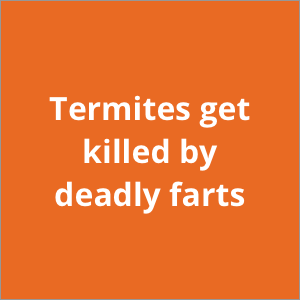 Termites get killed by deadly farts